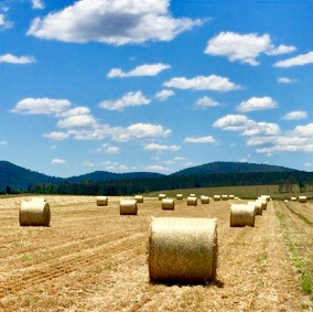 Toolonki Round bales for sale - Yulgilbar Pastoral Company