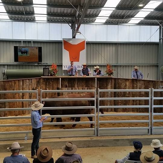 Yulgilbar Annual Production Sale 2017